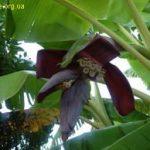 тропическое растение фото