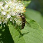 Стимулирующий эффект на работу пчел