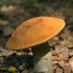 От чего зависит количество собираемых грибов?