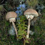 Сбор грибов снимает усталость