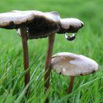 Чем привлекает грибника сбор грибов
