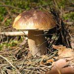 Корзина: во что собирают грибы?