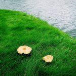 В какое время суток лучше ходить по грибы