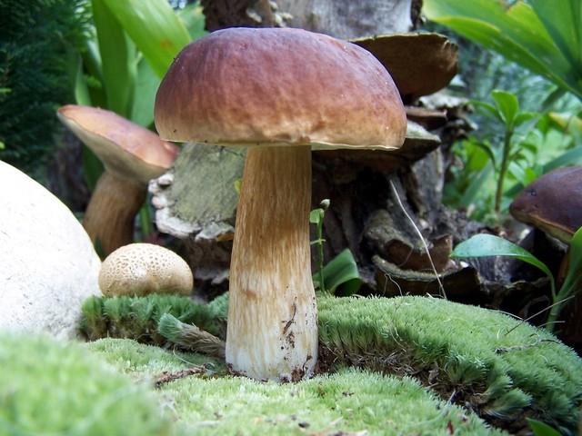 Места для поиска грибов