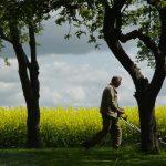 Почему долго не прорастают семена