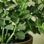 Полезные растения в квартире