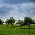 Уход за молодыми саженцами яблони