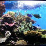 Обслуживание аквариума и правильный уход за рыбками