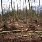 Роль деревьев в жизни человека