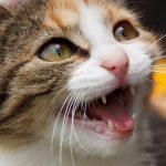 Стоматолог для животных: как сохранить зубы вашему домашнему питомцу
