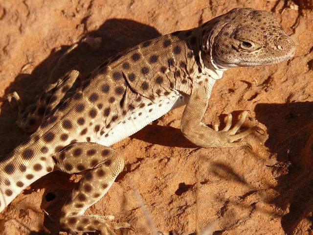 Как животные выживают в жарких пустынях