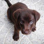 Чем кормить щенка: рацион и рекомендации