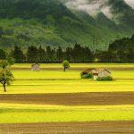 Проблема повышения урожайности и отрицательного воздействия на окружающую среду