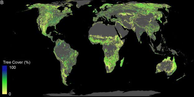 500 миллиардов посаженых деревьев могут спасти планету