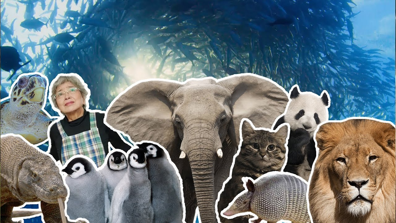 18 лучших моментов из жизни животных