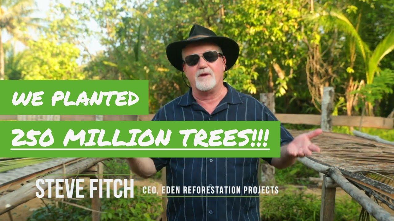 250 миллионов деревьев посажено — шаг к остановке изменения климата?