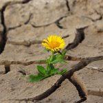 Глобальное потепление: какой ущерб оно может принести?