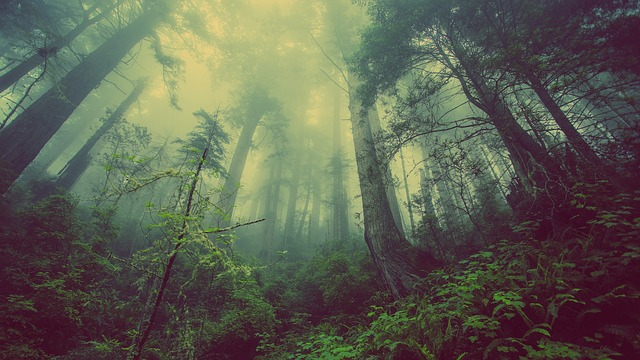 Преимущества умеренного климата для роста лесов и растений