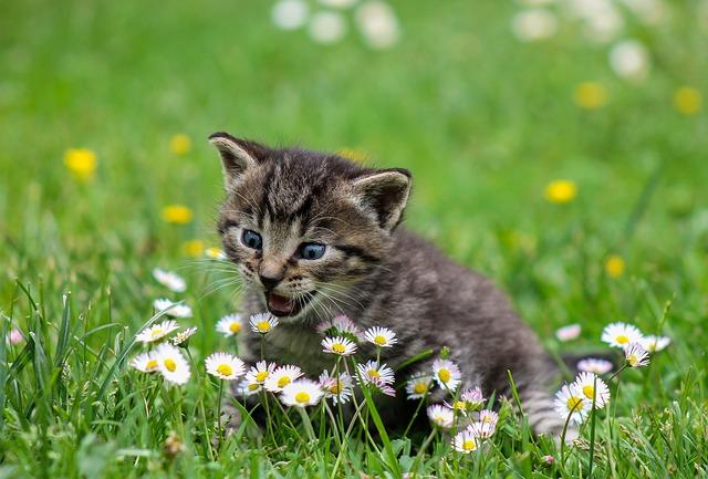 Интересные случаи участия животных в опылении растений