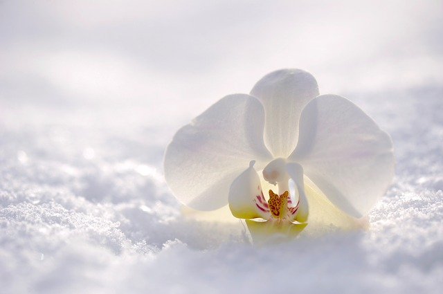 Воздействие холода и жары на жизнь растений