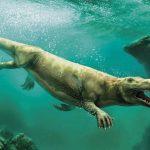 Эволюция китов и дельфинов: история, как они попали из суши в воду