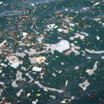 Что каждый из нас может сделать чтобы спасти океан