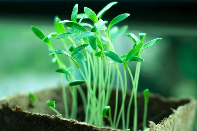 Тайная и загадочная жизнь растений