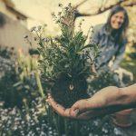 Самостоятельное выращивания целебных растений, стоит ли начинать?